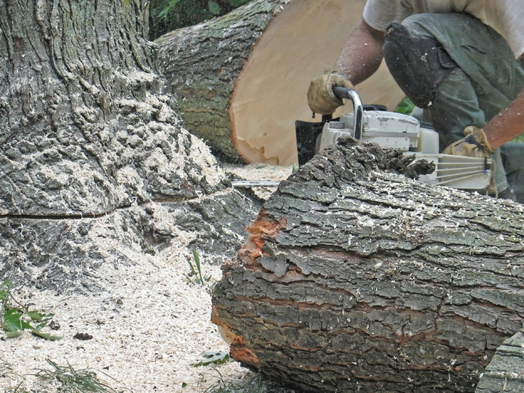 Who Offers Tree Services in Lincolnton, NC?